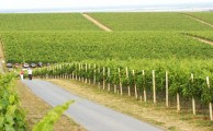 Baranyai borvidék - Ha Pécs utcáin sétálgatva megkérdeznénk a mellettünk haladóktól, hogy mi az, ami az embereket Pécsre és a környékbeli településre vonzza, akkor a válaszolók nagy része szinte kivétel nélkül azt felelné: a bor